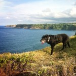 Lexi Dogg Taking a Cliff Walk