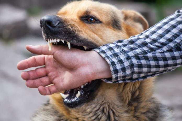 OFF THE BEAT: Biting the hand — and eye and upper arm — that help you
