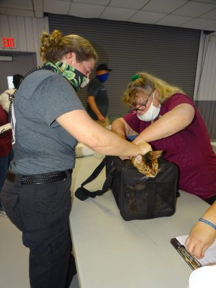 <p><p>Melia Richards and veterinary assistant Billie Garner with Volusia Animal Services quickly microchip a startled feline.</p></p><p></p>