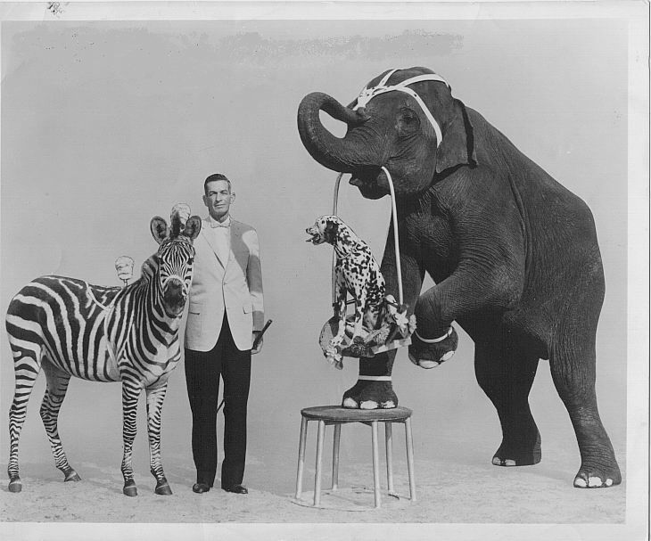 An elephant-sized legacy