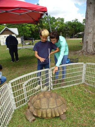 <p><p>Lake Helen's Annual Easter Festival featured a petting zoo.</p></p><p></p>