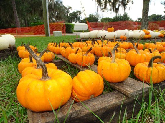 <p>#6. Little Pumpkins.jpg</p><p></p>