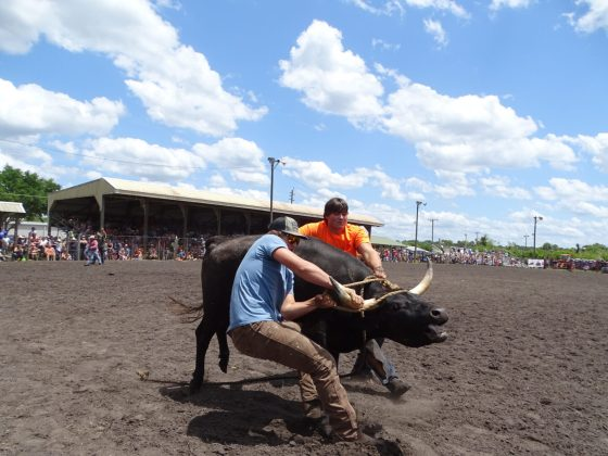 <p><p>Tucker Johnston and Derek Pell work to control a steer</p></p><p></p>