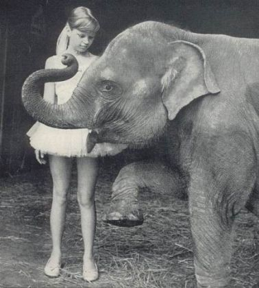 """<p><p><span id=""""docs-internal-guid-bd90a890-7fff-5e99-d578-0eeb45764b2f""""><strong>CHILDHOOD FRIENDS</strong> <span>— A young Liz Dane and her elephant companion Queenie share some quality time together. Dane's father, Bill Green, adopted Queenie for his exotic-animals zoo in 1963, when Dane was 9 years old. Dane said she quickly became close to the 6-month-old Asian elephant, who she said was not unlike a loving family dog.</span></span></p></p><p></p>"""