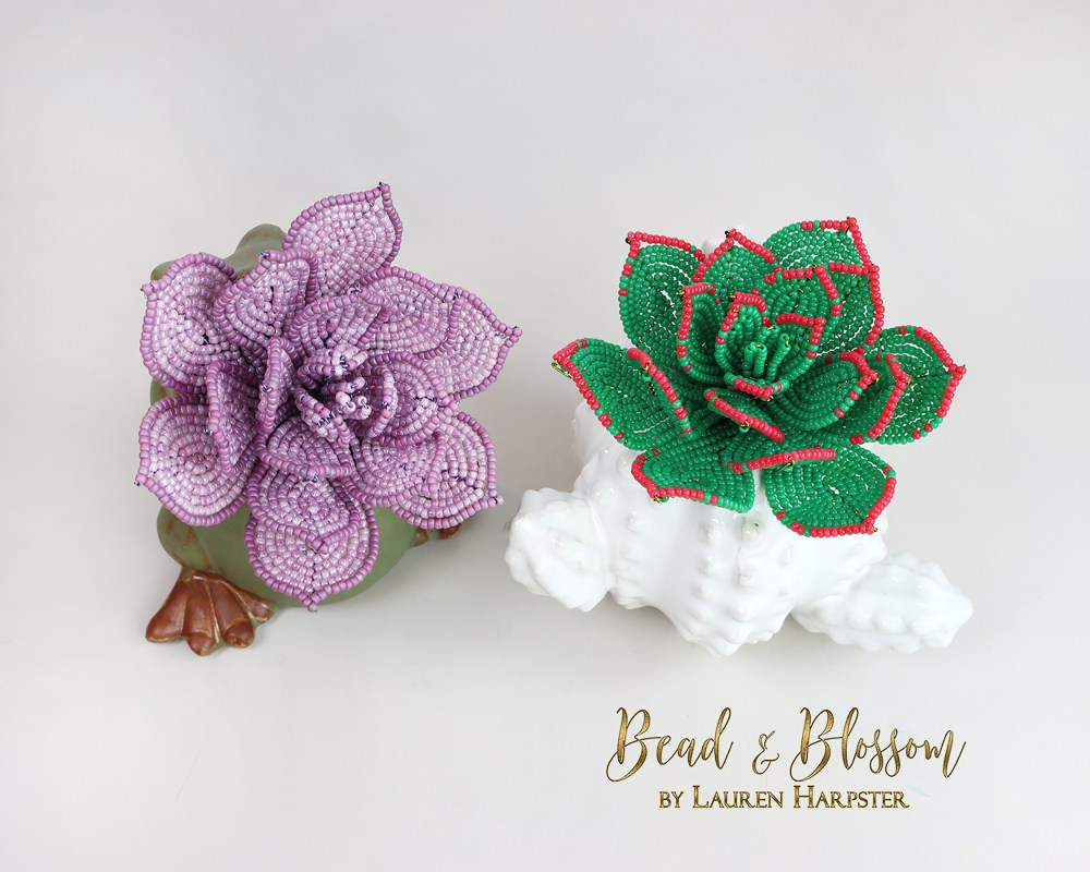 French beaded echeveria succulents by Lauren Harpster