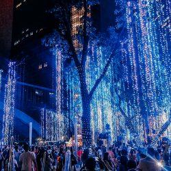 Ayala Lights