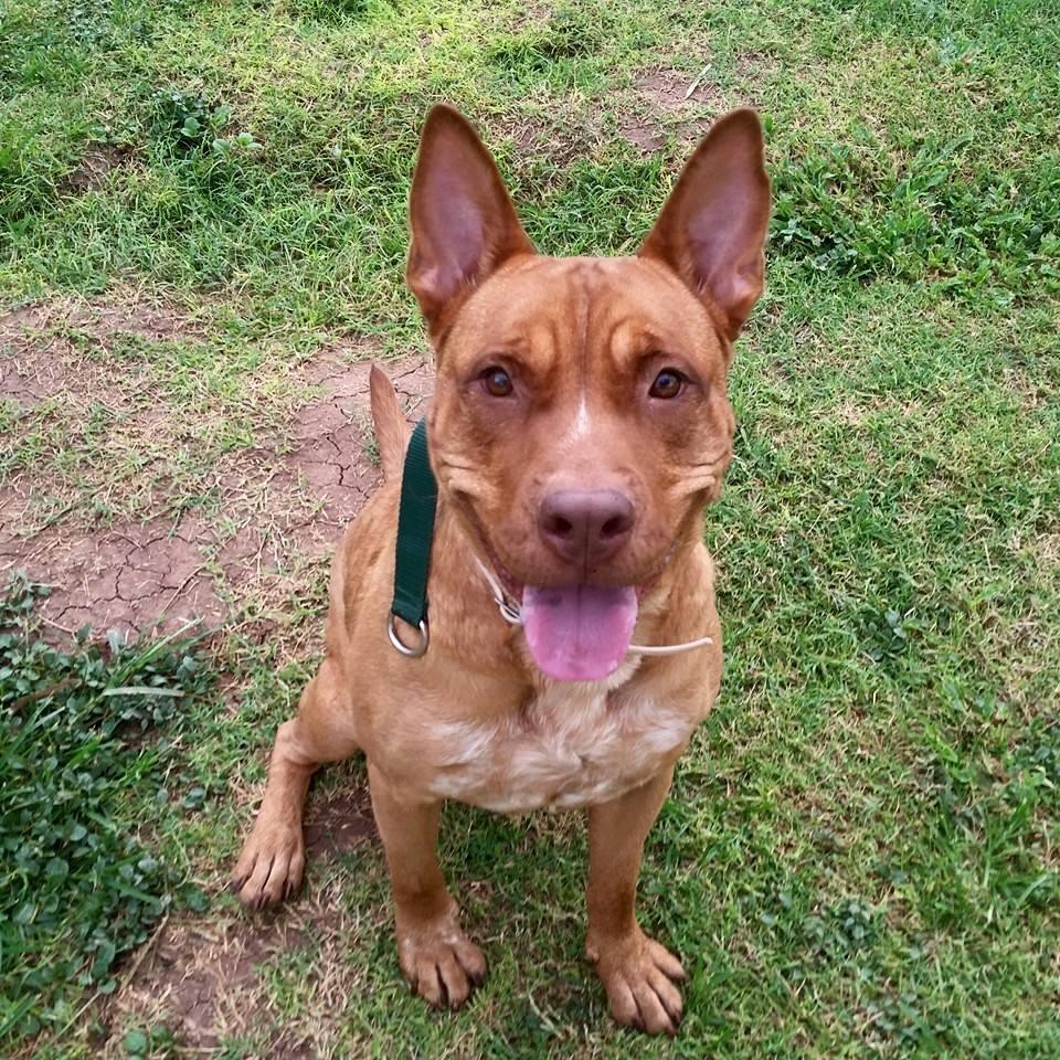 Bridge Rescue for Dogs Tucson