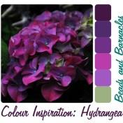 Colour Inspiration - Hydrangea