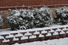 Snow Geometry