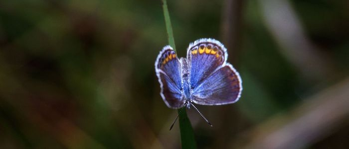 5 Ways to Show Clients You're a Rare Blogging Butterfly
