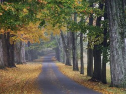 journey-into-fall-louisville-kentucky1