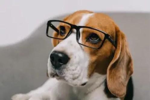 Beagle Intelligence