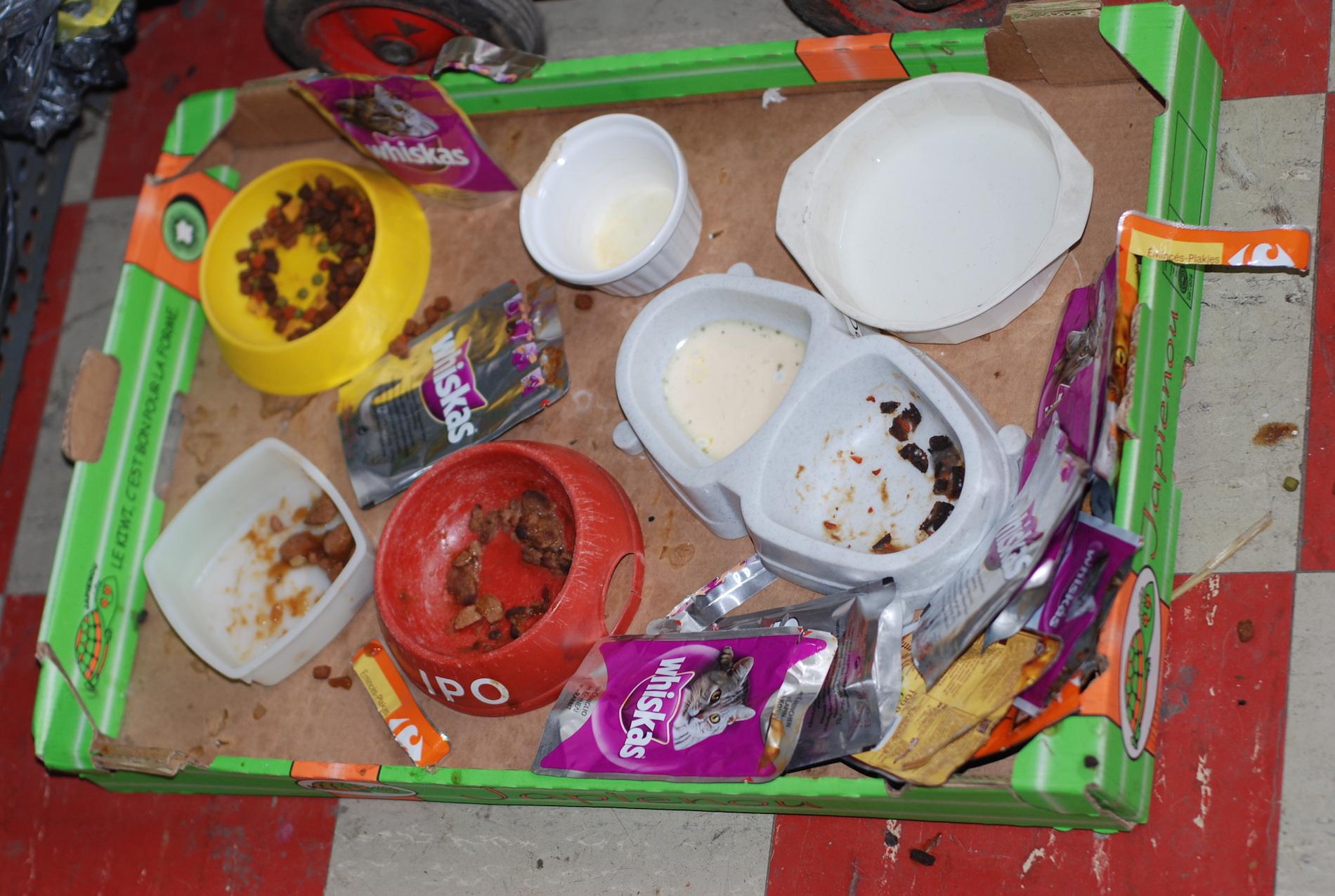 En Pipo,de poes krijgt ondertussen genoeg te eten.