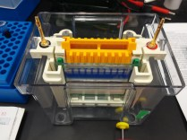 polyacrylamide gel set-up 01