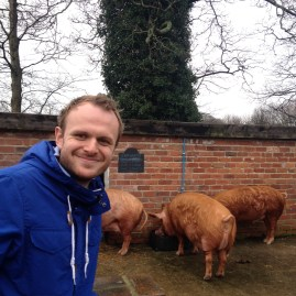 Wayne and the pigs