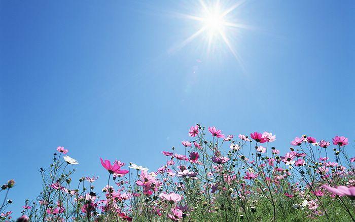 1440x900_Blue_Sky_Flowers_HM030_350A