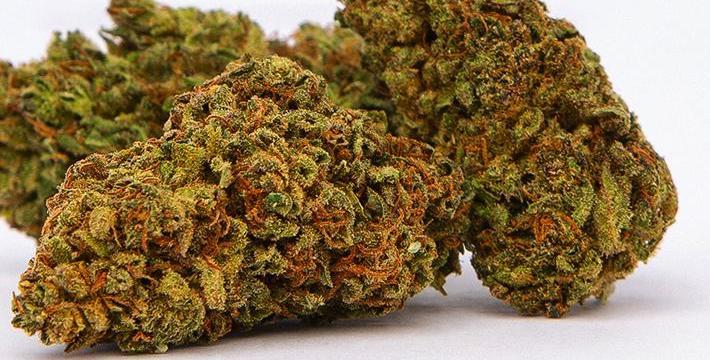 Lifter Hemp CBD Flower Review