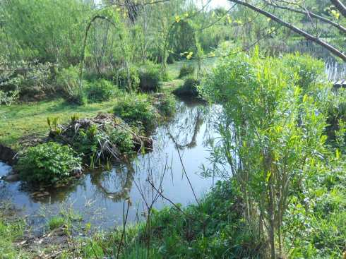 willow arches and ponds at bealtaine Cottage permaculture gardens