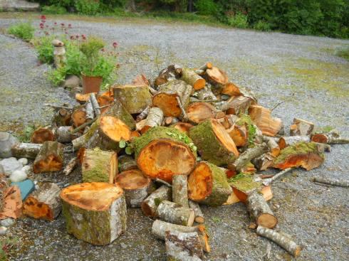 June 2011 Permaculture 002