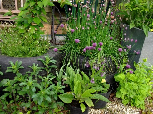 Herbs in tyres at Bealtaine Cottage