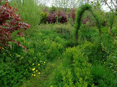 Pond garden at bealtaine Cottage