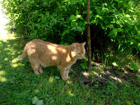Missy Cat at Bealtaine cottage June 2013