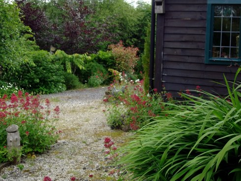 Front of cottage and porch surrounded with Valerian this morning.