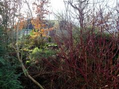 The woodland that surrounds Bealtaine Cottage