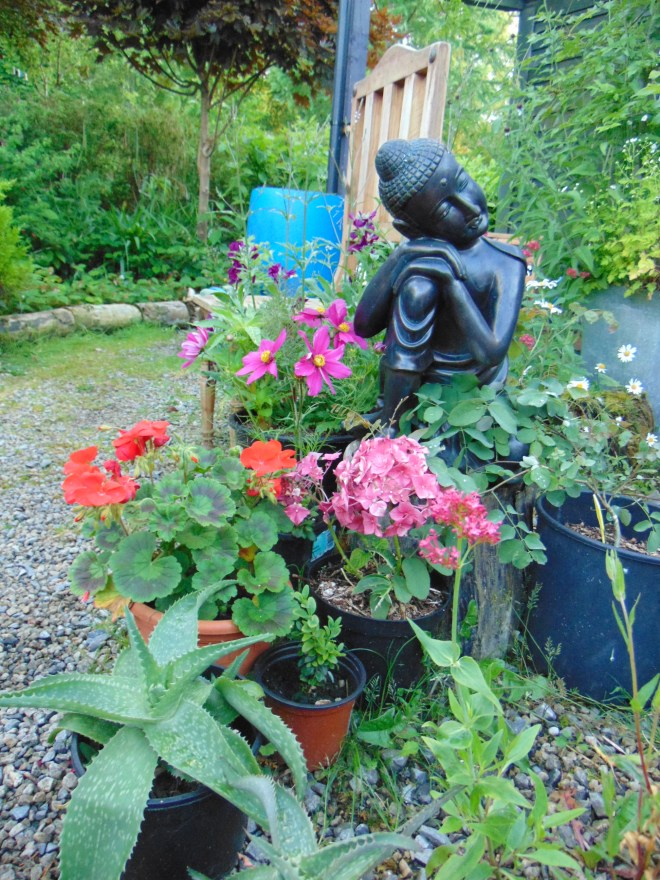 Garden permaculture at bealtainecottage.com 084
