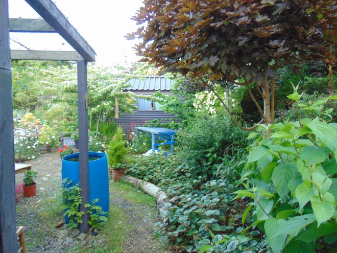 Garden permaculture at bealtainecottage.com 089
