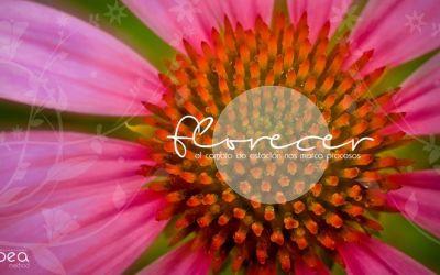Suelta el miedo a florecer