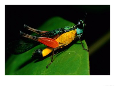 Summary and Analysis of On the Grasshopper and Cricket by Keats