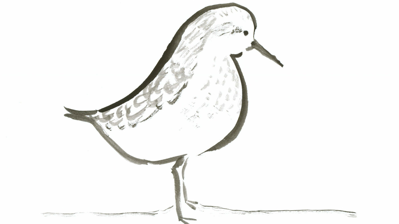 Summary and analysis of Sandpiper by Elizabeth Bishop