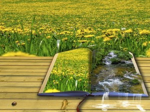 Poetry book in sunny field