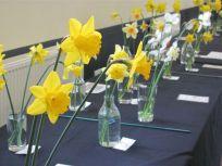 daffodil classes