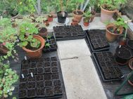 and a few more seed trays