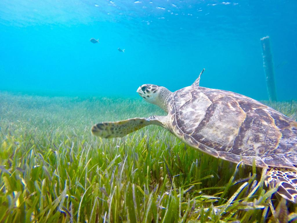 S is for Sea Turtle
