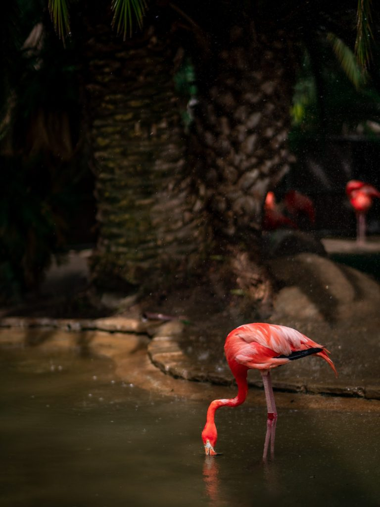 F is for Flamingo