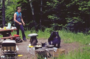 bear_campground.jpg