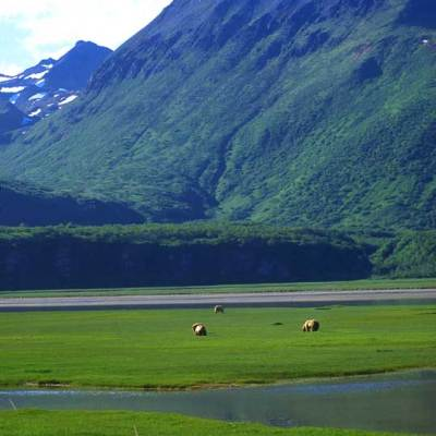 <h2>Saltwater Sedge Flat</h2><p>Coastal sedge flats are rich feeding areas for coastal grizzlies in Alaska in late spring and summer.</p>