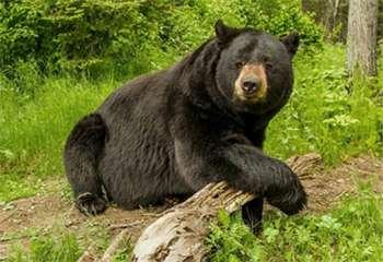 Meet Our Bears