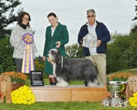 BOB - GCH Potterdale Jubilee Diamond OAJ NF RE HT