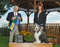 Obedience HIT in Regular Classes - Britannia Sebring Serendipity CDX RE