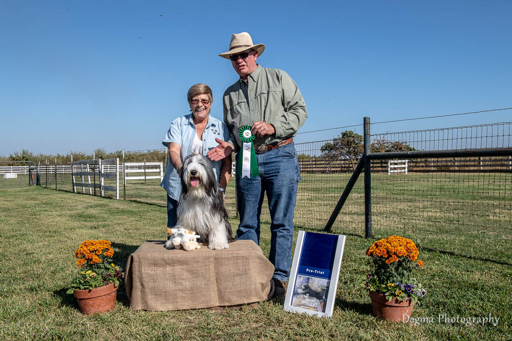 herding standard | Search Results | Bearded Collie Club of