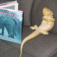 Bearded Dragon Reading?
