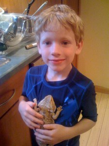 Bearded Dragon Pet for a Child