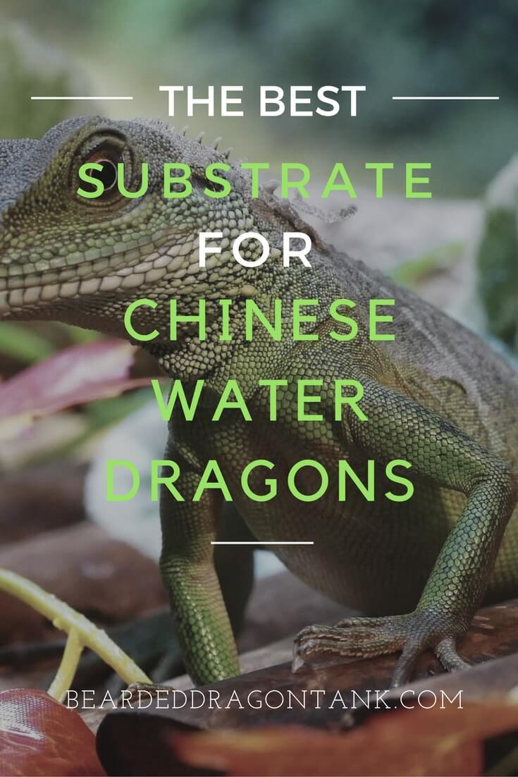 Chinese Water Dragon Substrate