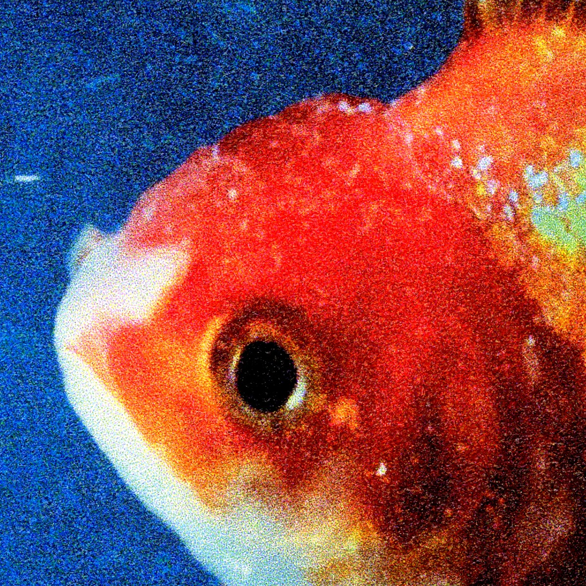 big fish theory cover image