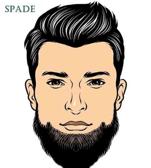 spade beard illustration