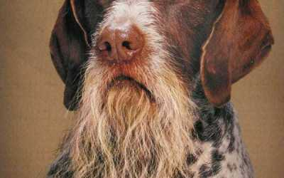 animals with beards